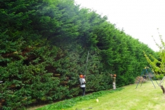 paysagiste belle ile_entretien de jardin 01 NEW